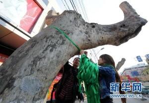 Stuttgart21 auf Chinesisch – Nanjinger Baumschutzbewegung