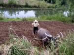 Wie lässt sich eine nachhaltige Entwicklung von Chinas agraren Regionen verwirklichen? ©twocentsmore