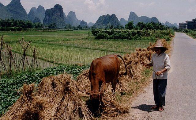 Chinesischer Bauer am Rand eines Reisfelds. Urheber: Markus Raab http://tinyurl.com/j5xjcqm